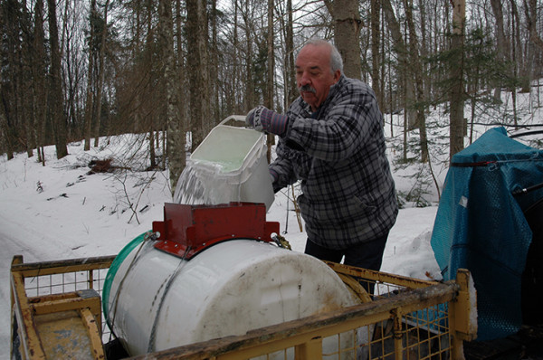 Using 3-gallon buckets we scoop the sap from the barrels and pour it into the trailer vat. Once light enough, we lift and pour from the actual barrel. Every single drop counts.