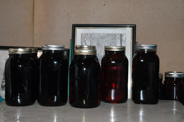 The liquid gold in each of these mason jars was sap running through trees just the day before. How cool is that?!