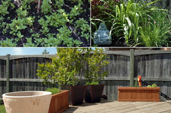 """The herb portion of my garden is mainly cilantro, parsley, basil, rosemary, thyme, sage, oregano & hot peppers in planters on the deck. In the back corner we have loads of chives and what I affectionately call """"My Mojito Garden"""" - if anyone is in need of mint this summer, come see me."""