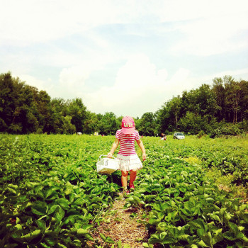 alice-strawberry-picking