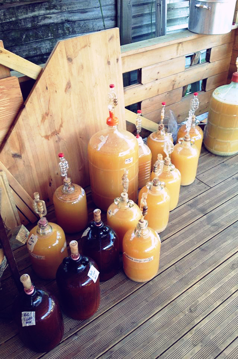 Making Cider: From Branch to Bottle
